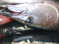 WestCoastFish0067