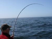 WestCoastFish0161