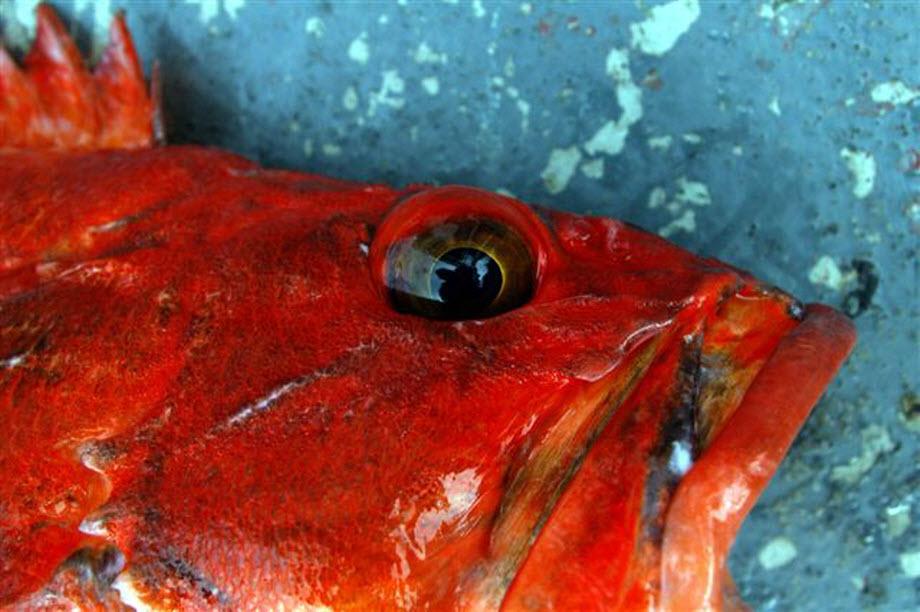 WestCoastFish0175