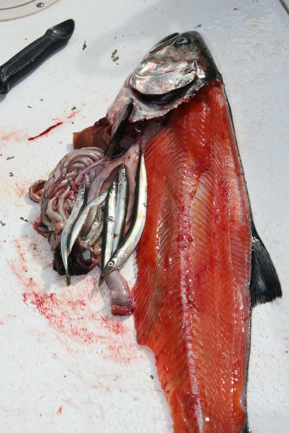 WestCoastFish0625