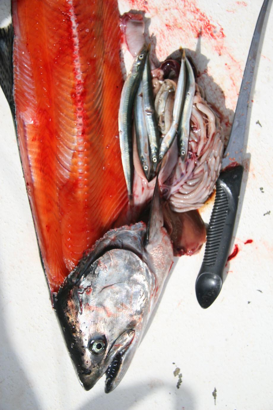 WestCoastFish0628