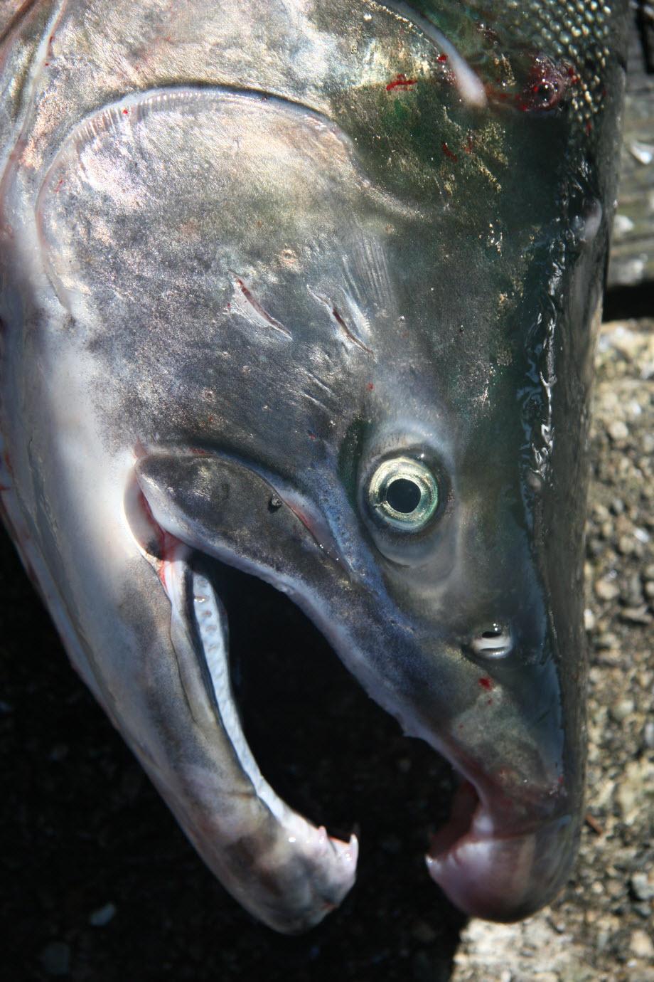 WestCoastFish0727