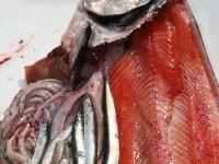 WestCoastFish0626