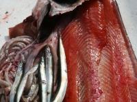 WestCoastFish0627