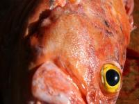 WestCoastFish0662