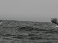 WestCoastFish0703