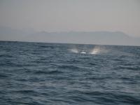 WestCoastFish0861