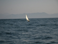 WestCoastFish0862
