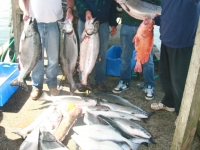 WestCoastFish1023