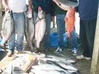 WestCoastFish1024