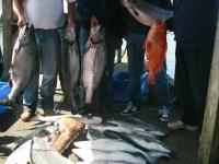 WestCoastFish1025