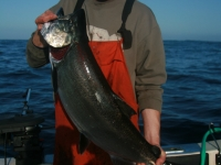 WestCoastFish1041