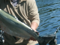 WestCoastFish1054