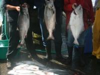 WestCoastFish1068