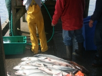WestCoastFish1070