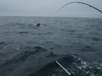 WestCoastFish1073