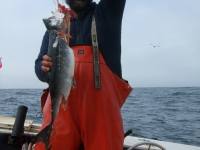 WestCoastFish1074