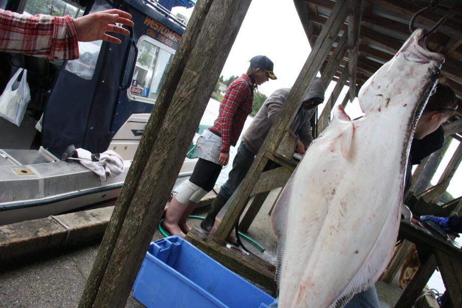 WestCoastFish1250