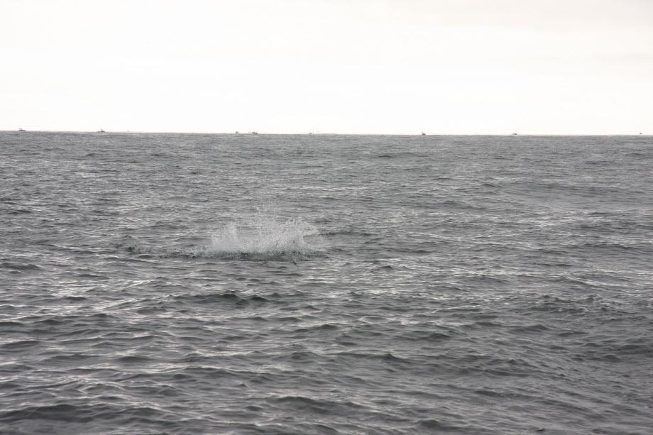 WestCoastFish1664