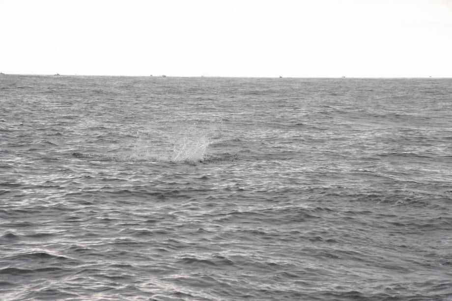 WestCoastFish1665