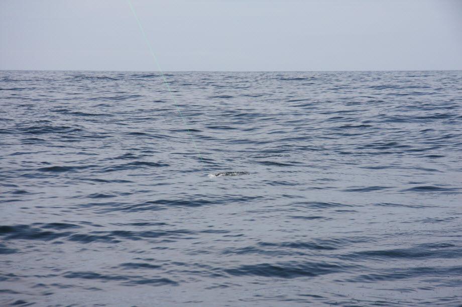 WestCoastFish1680