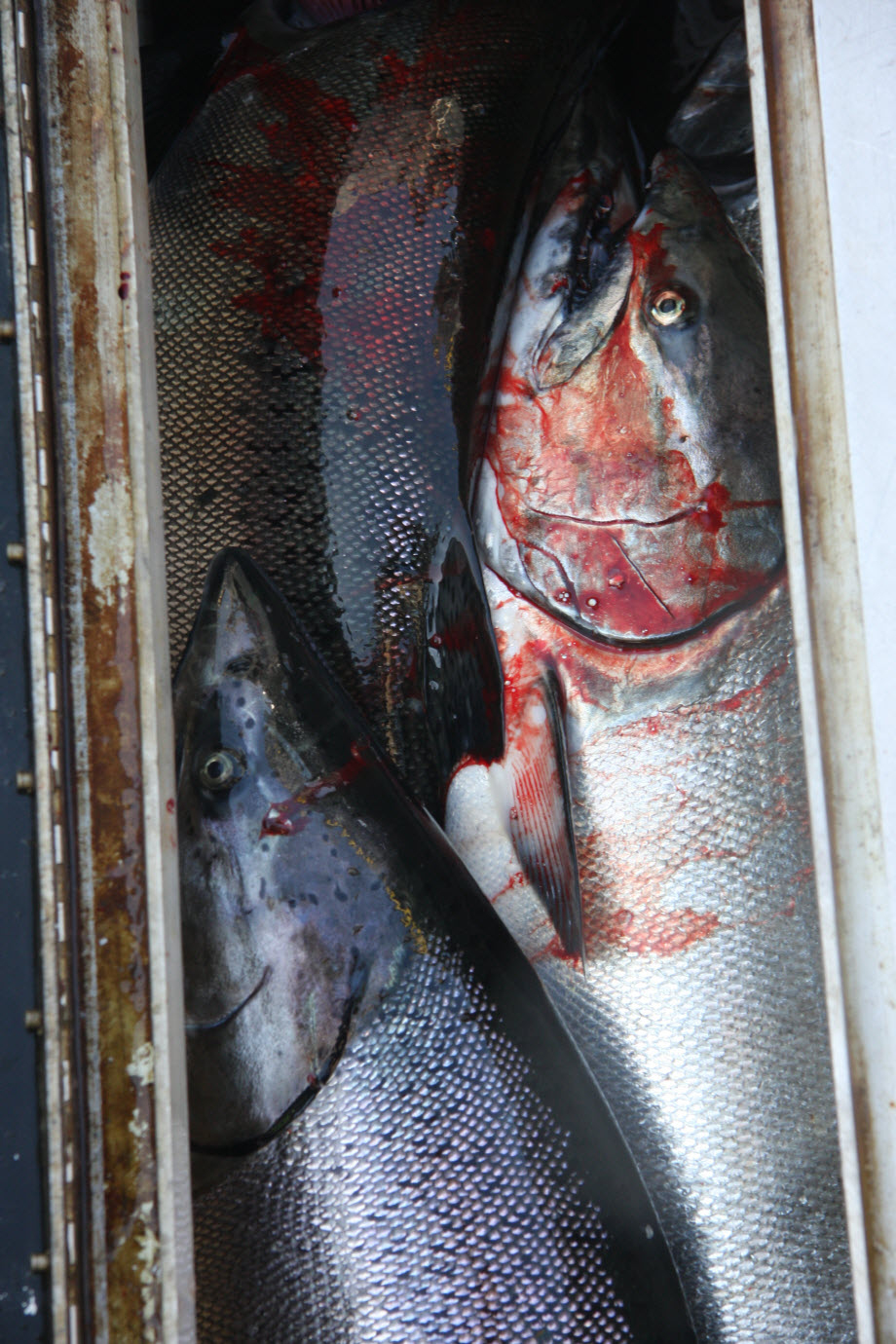 WestCoastFish1688