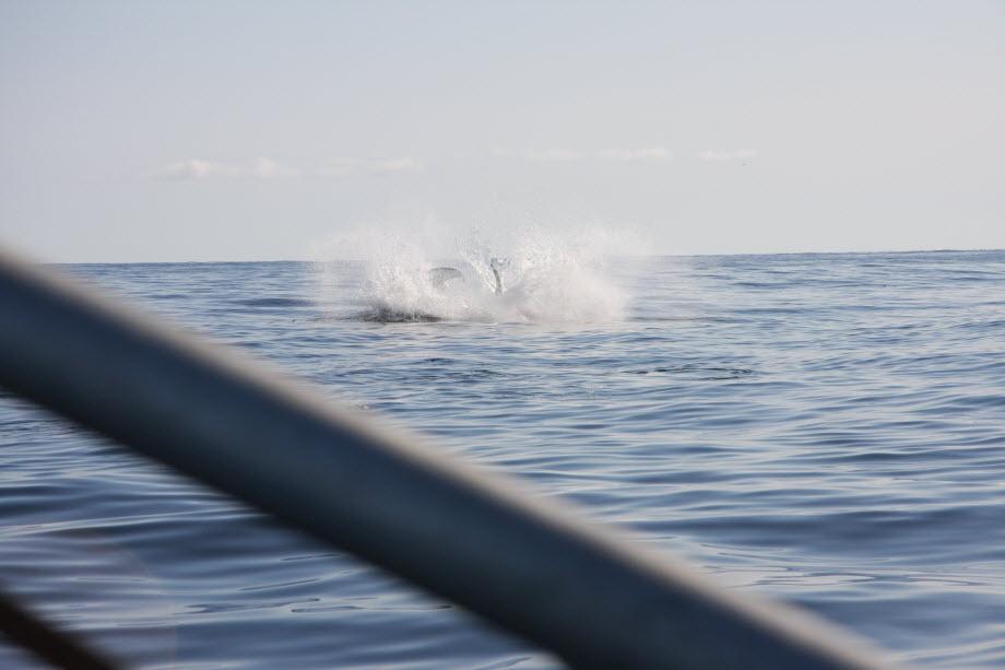 WestCoastFish2463