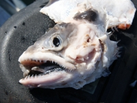 WestCoastFish1508