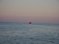 WestCoastFish1542