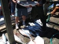 WestCoastFish1550