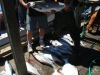 WestCoastFish1551