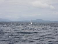 WestCoastFish1573