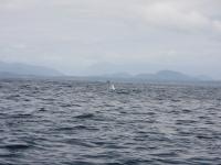 WestCoastFish1574
