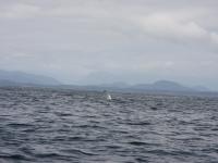WestCoastFish1575