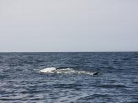 WestCoastFish1589