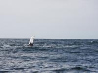 WestCoastFish1590
