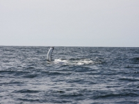 WestCoastFish1592