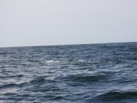 WestCoastFish1594