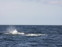 WestCoastFish1599