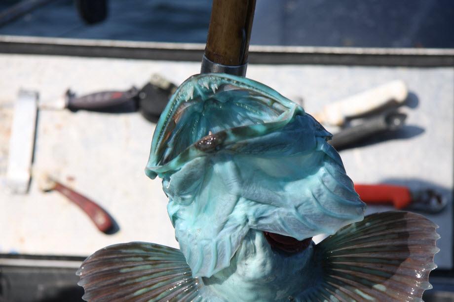 WestCoastFish3376