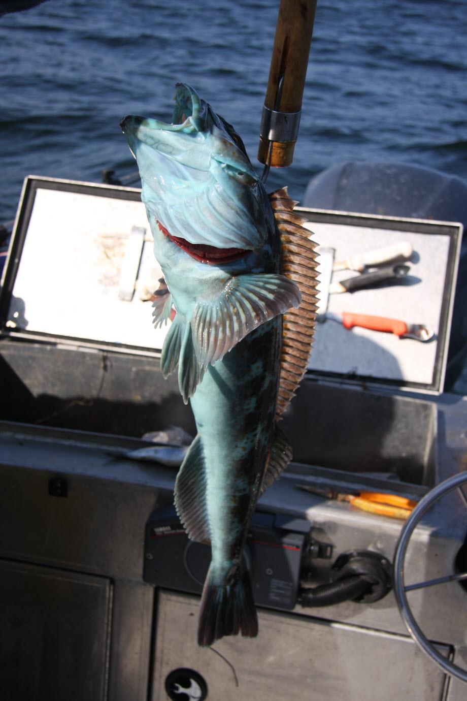 WestCoastFish3378