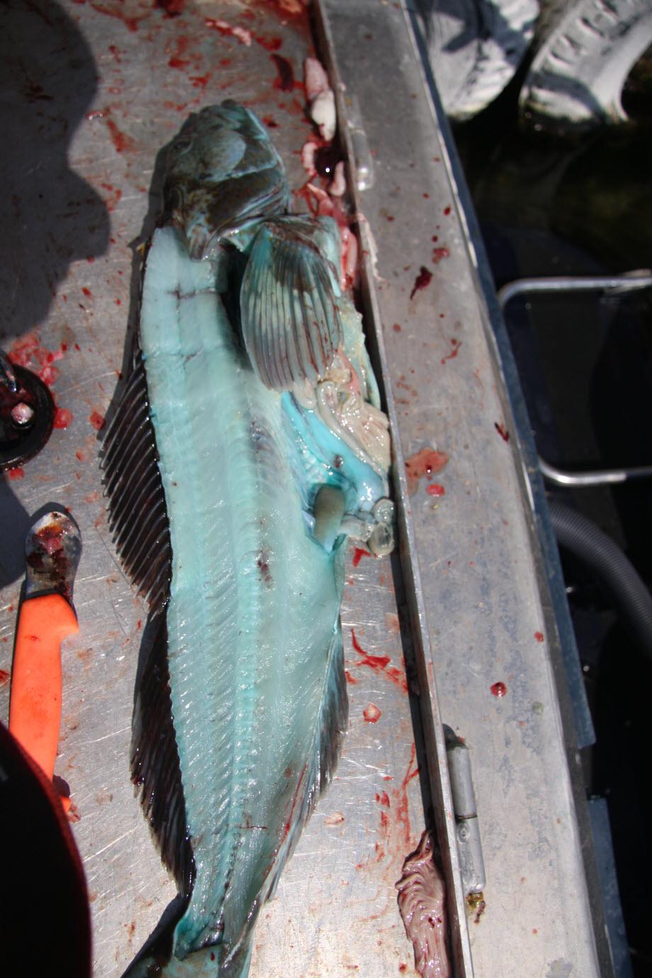 WestCoastFish3382