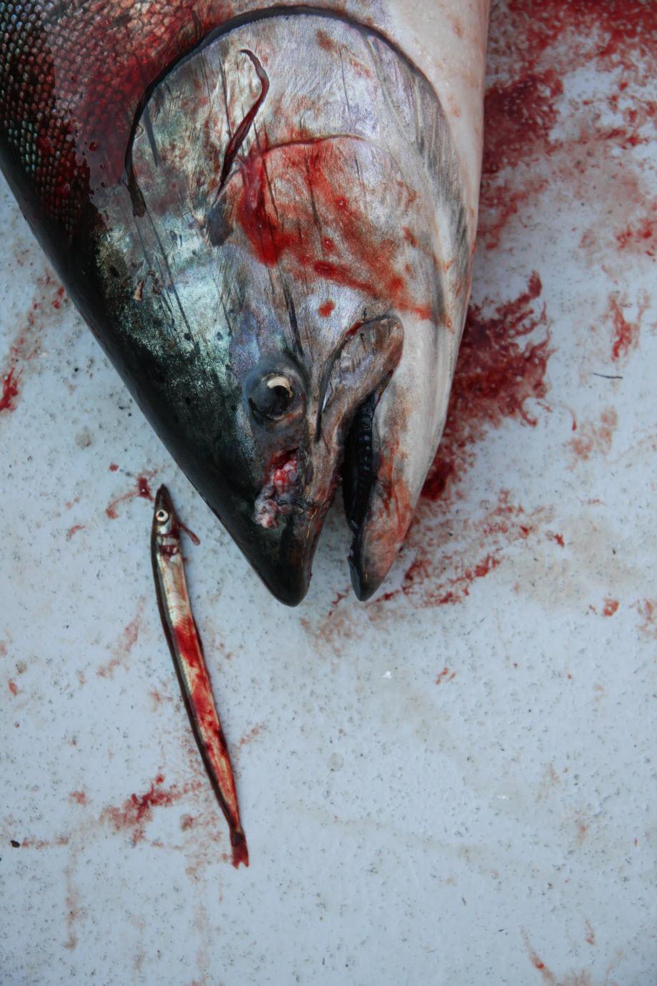 WestCoastFish3387