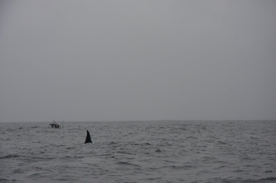 WestCoastFish3612