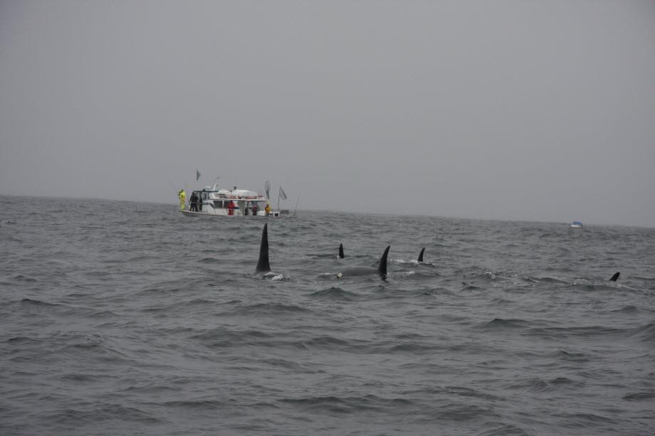 WestCoastFish3629