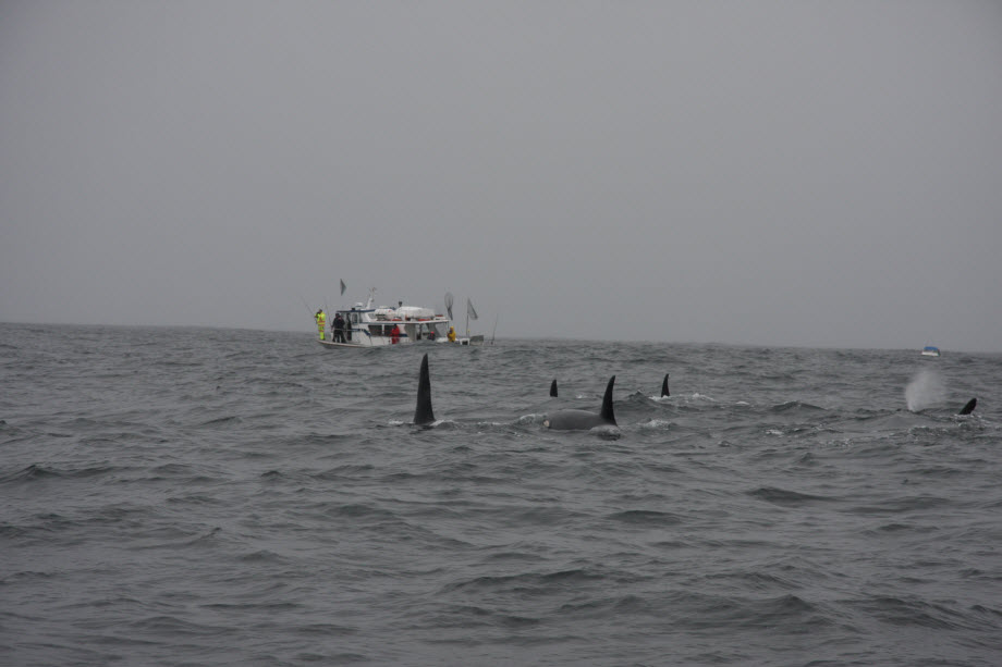 WestCoastFish3630