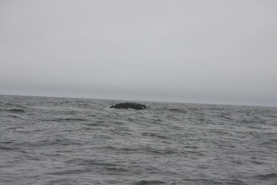 WestCoastFish3815