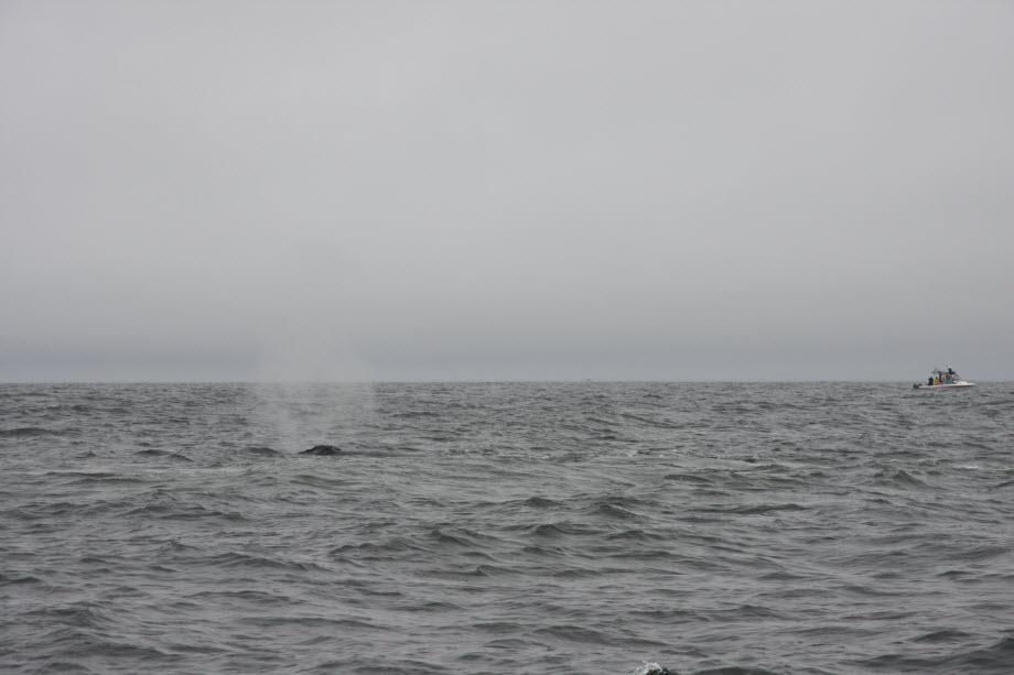 WestCoastFish3821