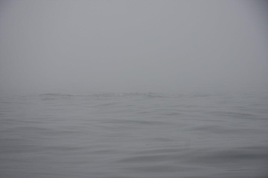 WestCoastFish4085