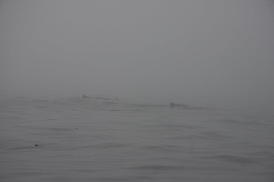 WestCoastFish4087